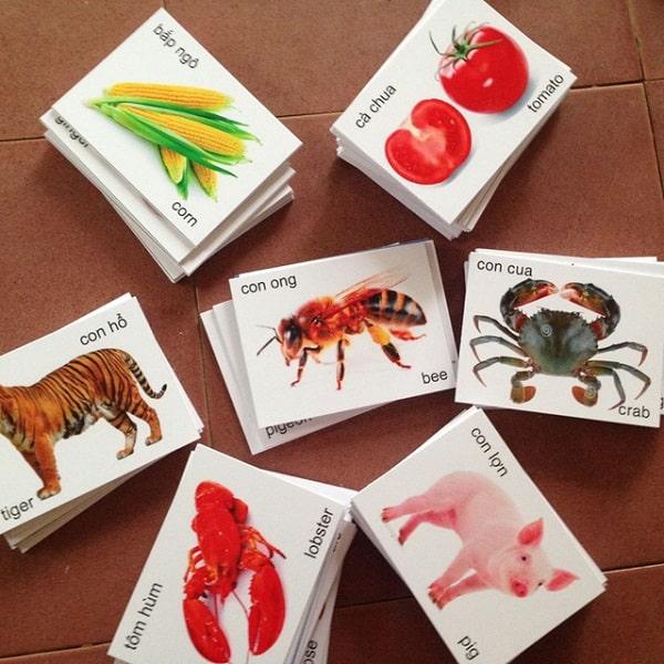  sử dụng hình ảnh để giúp con phân biệt các loại động, thực vật