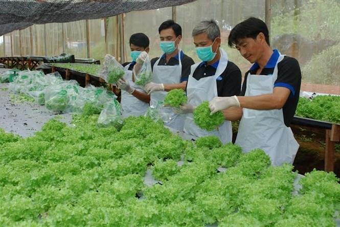 Tổng quan về việc làm kỹ sư nông nghiệp