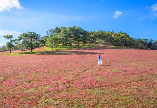 trangtin24h.com - Cành địa lan khu vực Đà Lạt được bán tháo với giá thành rẻ bởi vì nở hoa trước khi Lễ tết