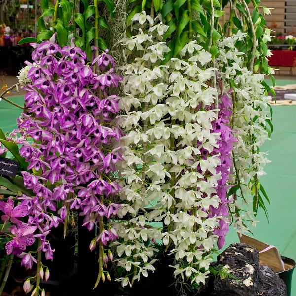 instavietnam.com - Đến sắm hoa rẻ ở khu vực Đà Lạt