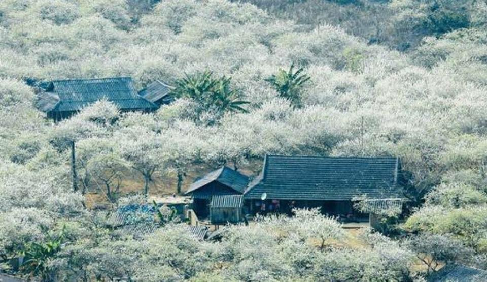 VnnewsHome.com - Tới thăm vùng đất Mộc Châu chốn bồng lai tiên cảnh của vùng tây bắc