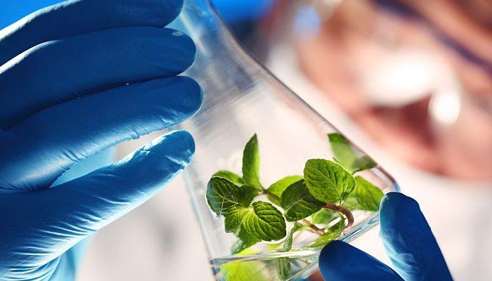 Kỹ thuật tìm việc làm tại hải phòng ngành công nghệ sinh học
